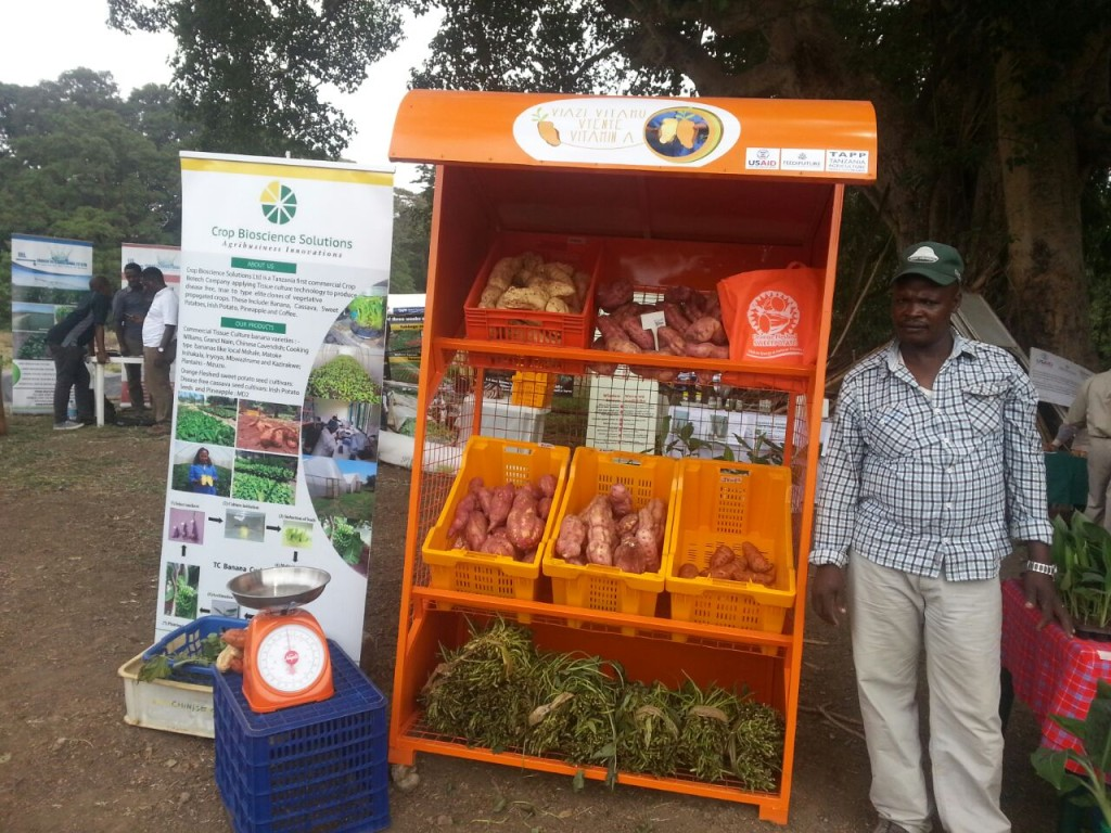 """CBS CEO Wilfred Mushobozi understands that in order to be commercially successful he needs to grow his market by  developing customer awareness not just about his quality seed, but also the crop. CBS has engaged in innovative marketing strategies – """"brand orange""""; with outreach to local schools to encourage production and consumption of orange-fleshed sweetpotato. CBS has also partnered with Tanzania Horticultural Association (TAHA) to supply contract farmers with quality planting material of varieties for the export market to the EU.  Vertical integration and appropriate partnering are options for fruitful PPPs. Credit: W.Mushobozi"""